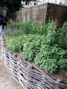 Wattle and Daub raised beds